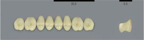 VITA MFT верхні бокові, колір 1M1, розмір PU31